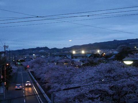 夜桜と月.JPG