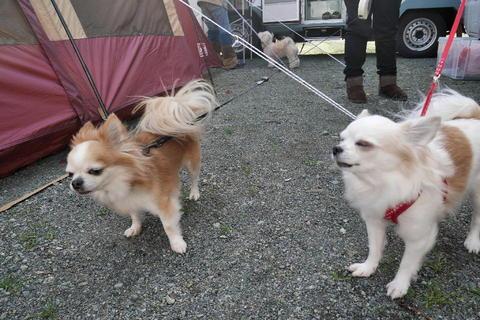 伊豆キャンプ旅11.JPG